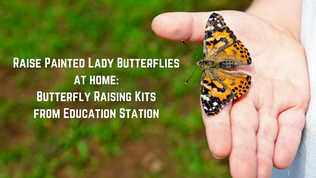 Butterfly Raising Kits from Education Station
