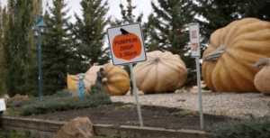 Fall Activities Around Alberta | Smoky Lake Pumpkin Festival 2018