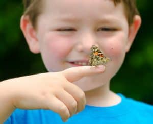 Butterfly Raising Kits
