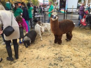Visit The Free West Edmonton Mall Petting Zoo All Summer Long
